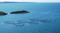 Resolution: 2016-01 Title: CONTINUATION OF PROHIBITION ON GREAT LAKES NET-PEN FISH FARMING Sponsor: Michigan United Conservation Clubs, Michigan Steelhead and Salmon Fishermen's Association, and Michigan Trout Unlimited Date: Approved January […]